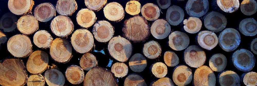 Foto eines Holzstapels mit Baumstämmen